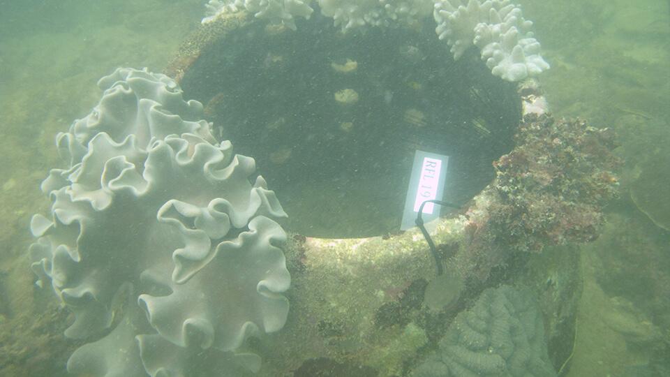 artificial reefs 2