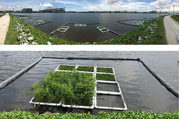 Improving reservoir water quality with aquatic plants: Benefits and challenges